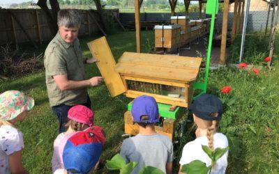Vorschulkinder im Bienengarten